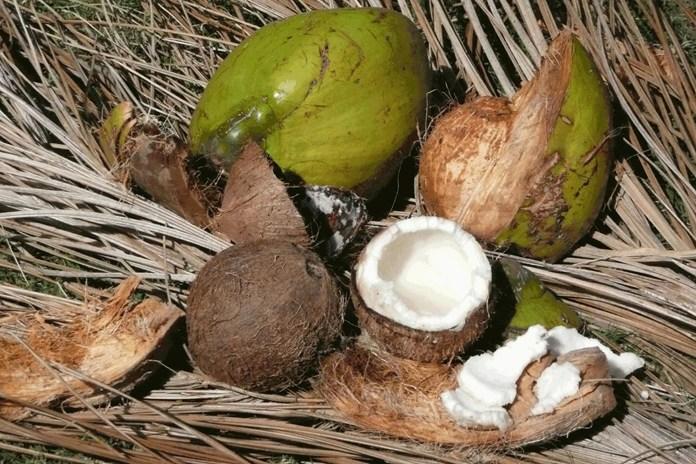 engenharia de produção com casca de coco